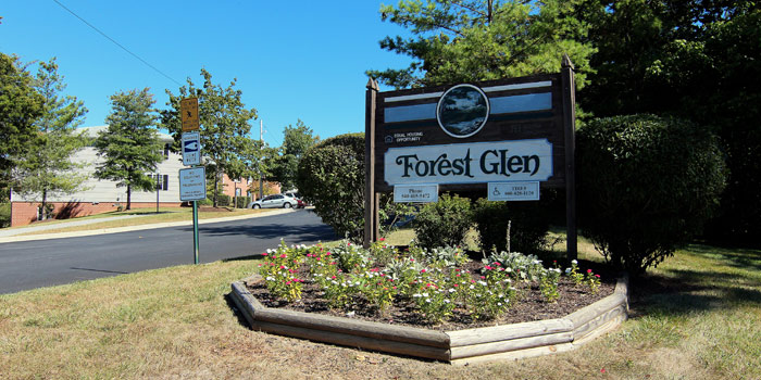 Forest_entrance